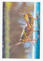 "Pkt #TF-006-""Beauty Surrounds Us"" Birthday"